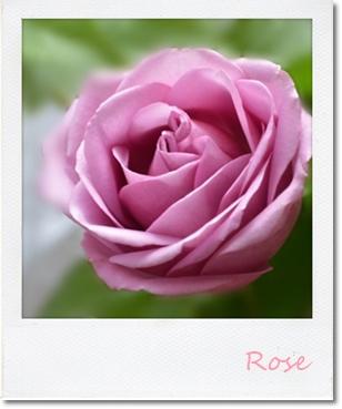 薔薇2201409