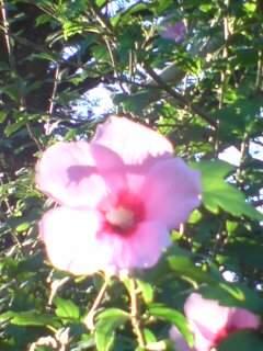 20100805 裏の花 1
