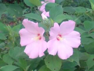 20100818 庭の花