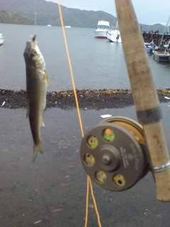 20101101 桟橋でハヤ釣り