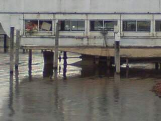 20101105 浅瀬に来たカワガラス
