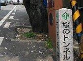 2011・04・10桜トンネル2