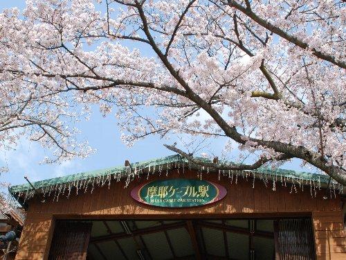 2011・04・10桜トンネル4