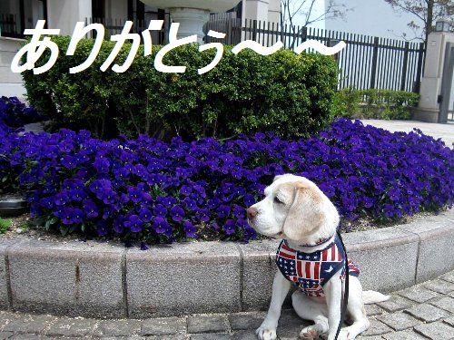 2011・04・17お礼