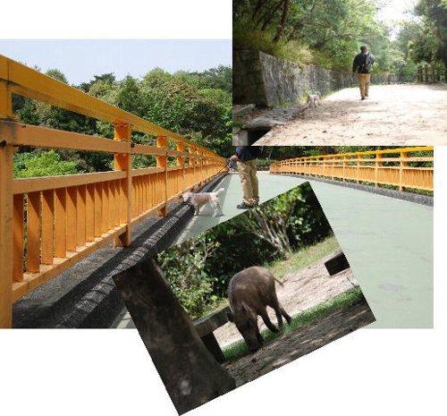 2011・05・04森林公園