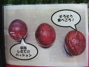 パッションフルーツ3