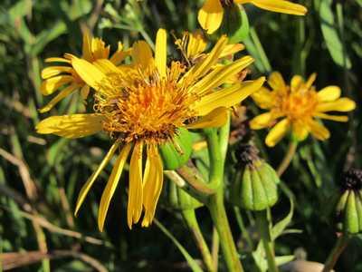 タデ原湿原の花2