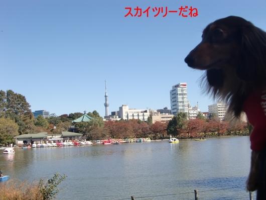 CIMG8485.jpg