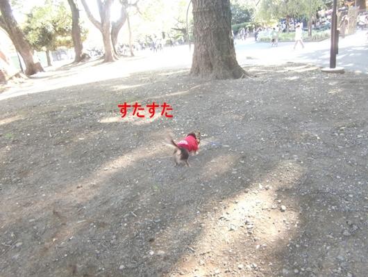 CIMG8490.jpg