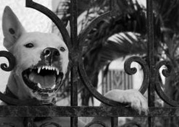怒り 犬 ドッグ