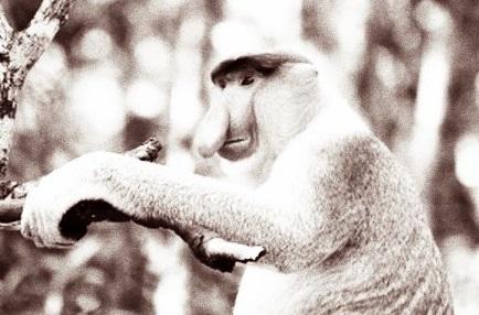 サル 傍観
