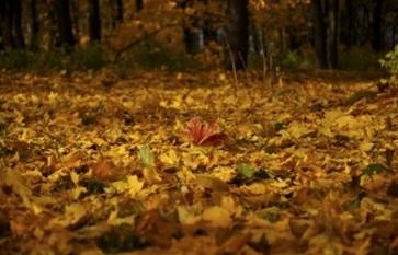 深秋 旬 季節