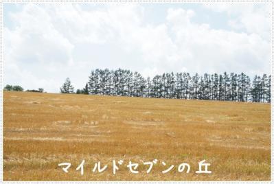 DSC03251.jpg