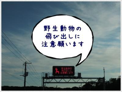 DSCN3456_20110906130537.jpg