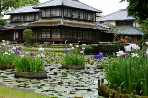 庭園菖蒲スイレン