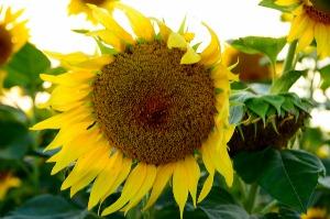 お花の中央