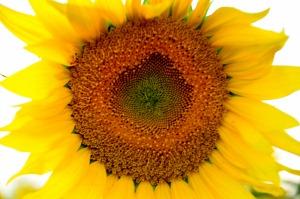 お花の中央 (4)