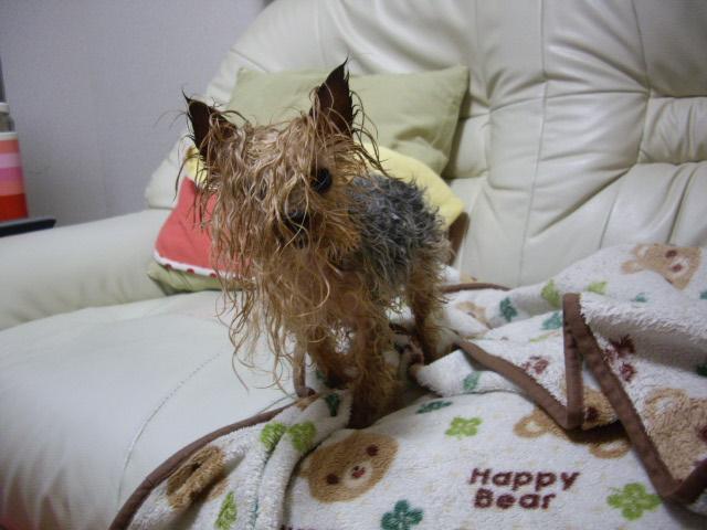 お風呂から逃げました