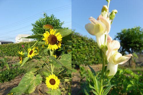 2011 お花 260-1