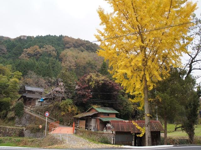 20131117TsuyamaS125s.jpg