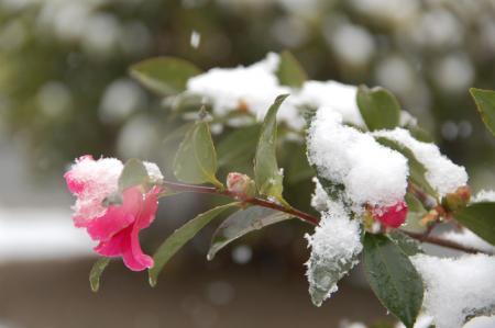雪の大阪6