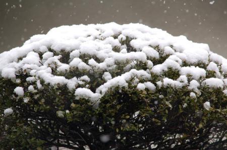 雪の大阪3