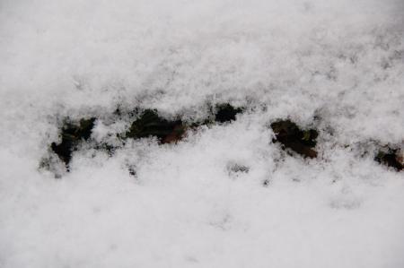 雪の大阪2