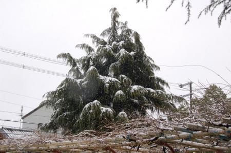 雪の大阪9