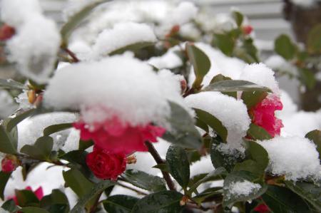 雪の大阪7