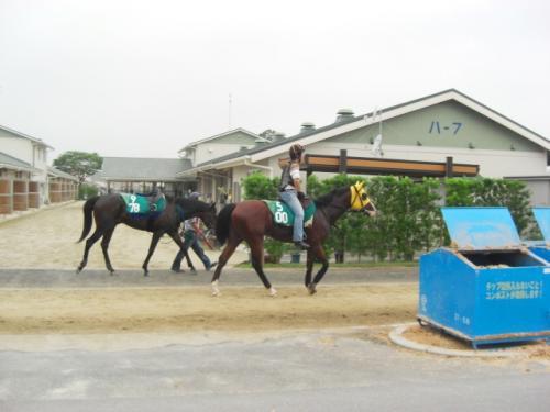 (6)前ゴールデンジャガー・後エムオーストロング(大根田)