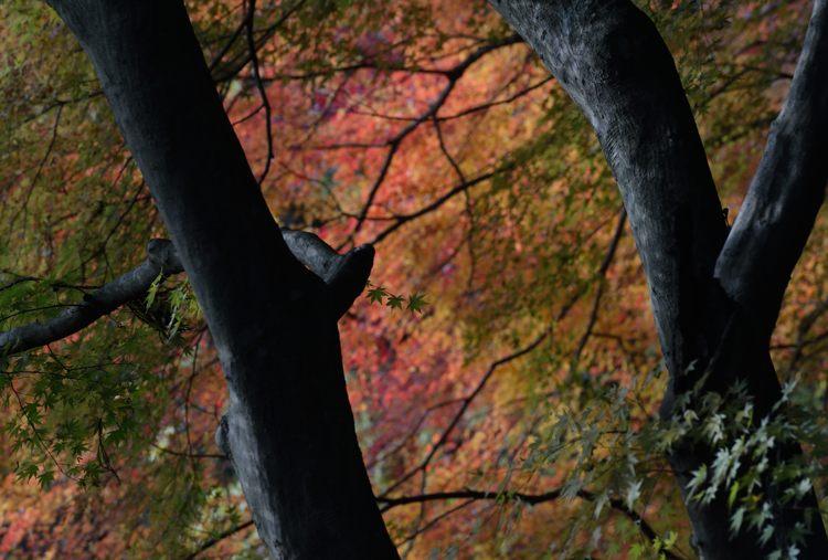 2013-11-26_0200-750.jpg
