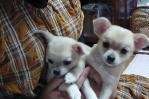 サラと赤ちゃん チビ3