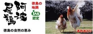 阿波尾鶏3