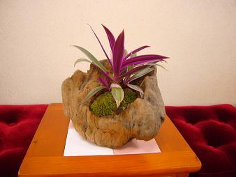 2012.6盆栽-2