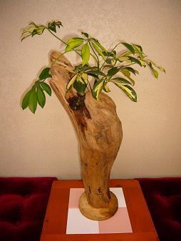 2012.6盆栽-1