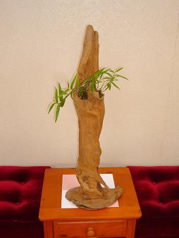 2012.8盆栽