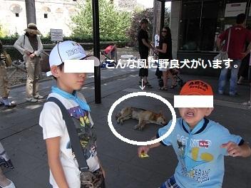 野良犬と子供たち