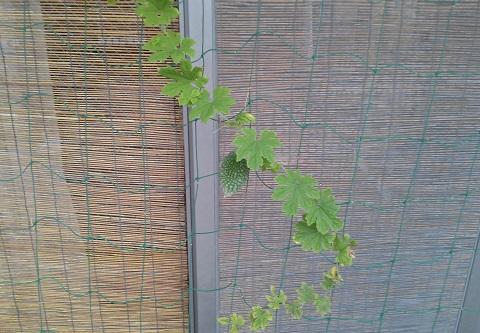 gardening177.jpg
