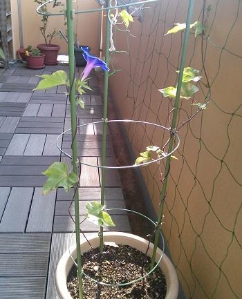 gardening180.jpg