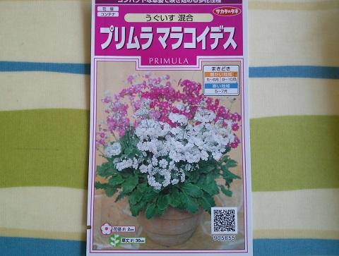 gardening184.jpg