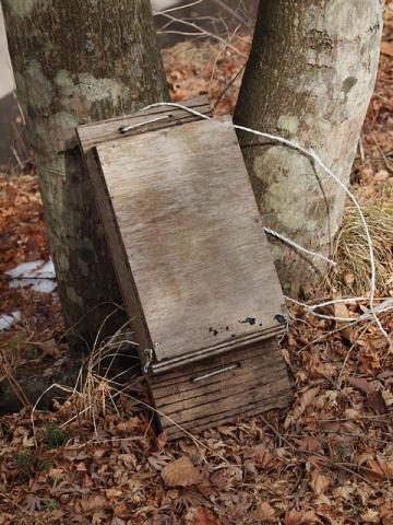 落ちたコウモリ巣箱