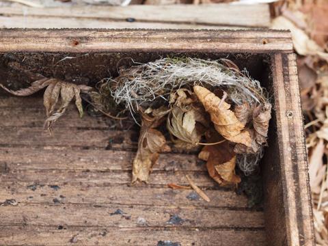 コウモリ巣箱巣材