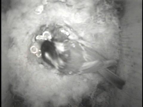 トンボ池巣箱120709-2