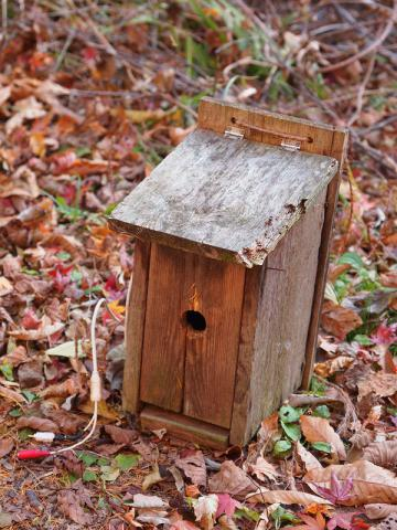 カラ用巣箱