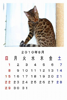 8_20100803003132.jpg