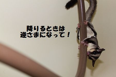 IMG_3174.jpg