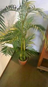 ボスコ観葉植物