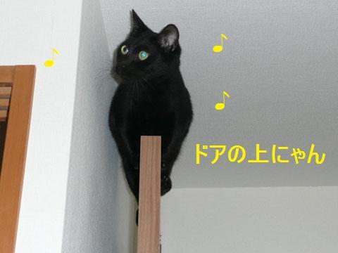 001kuro_20101121132044.jpg