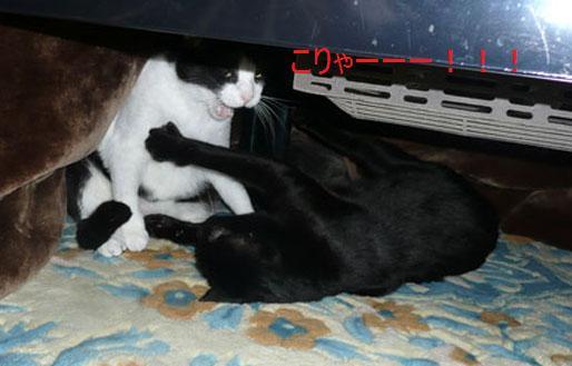 004nyannkuro_20110213125619.jpg