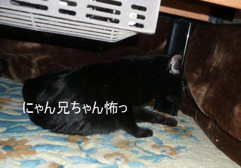 005kuro_20110213125724.jpg